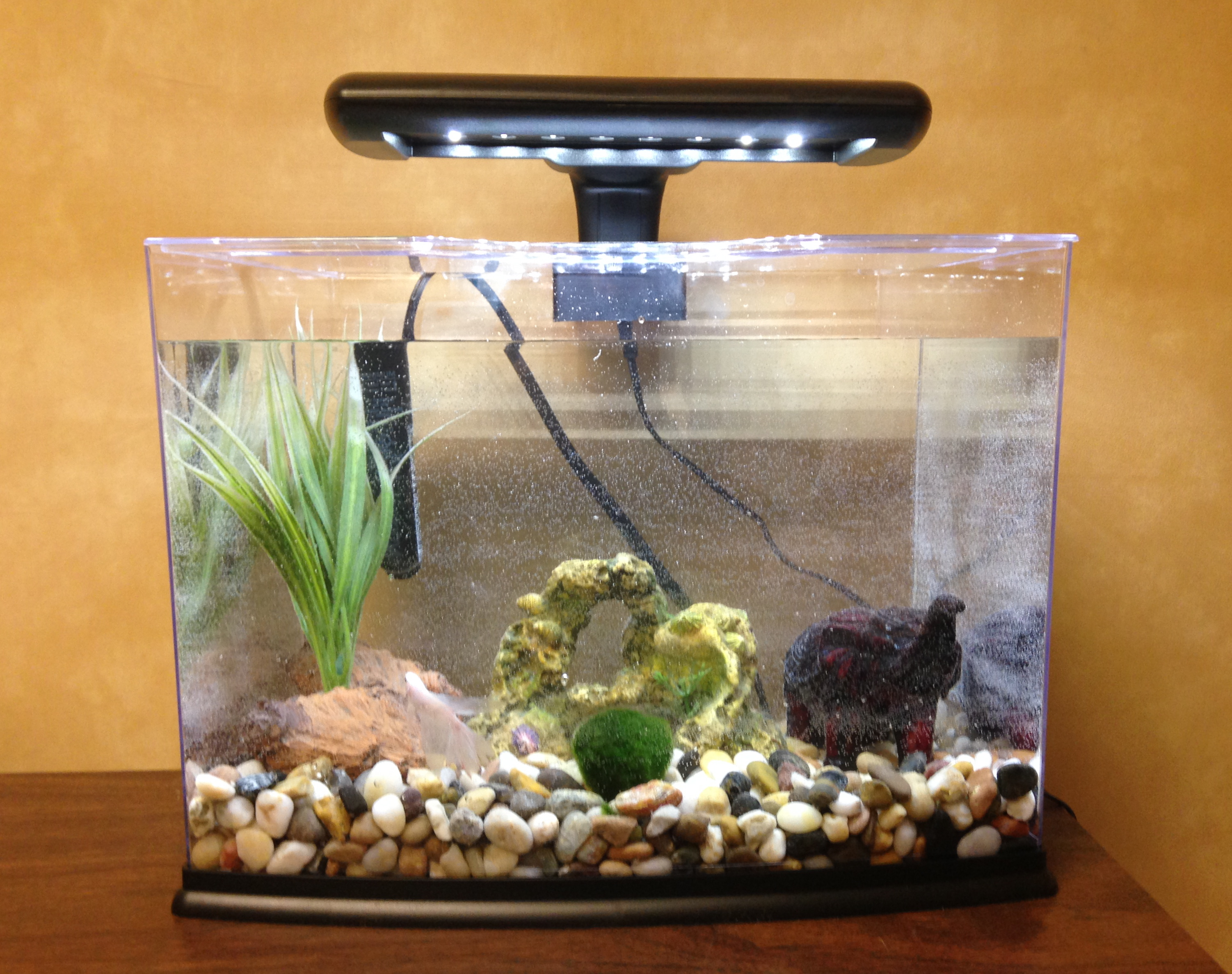 301 moved permanently for Betta fish tank heater