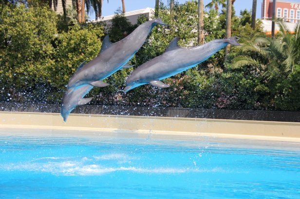 Dolphin Jumps