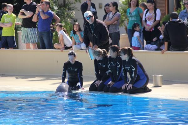 Dolphin Training 2