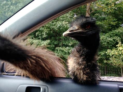 Emu Attack 2