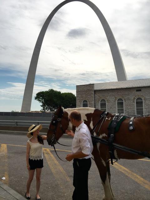 Horse St. Louis Arch