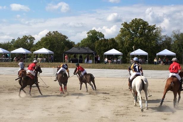 Polo Horses