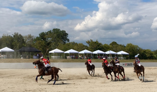 Polo Teams