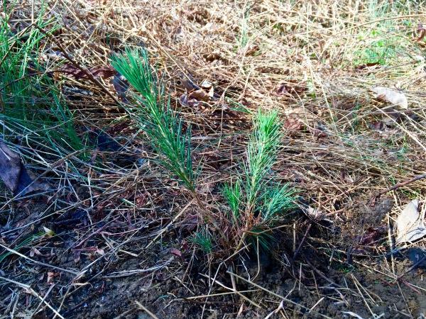 planting-a-tree-3