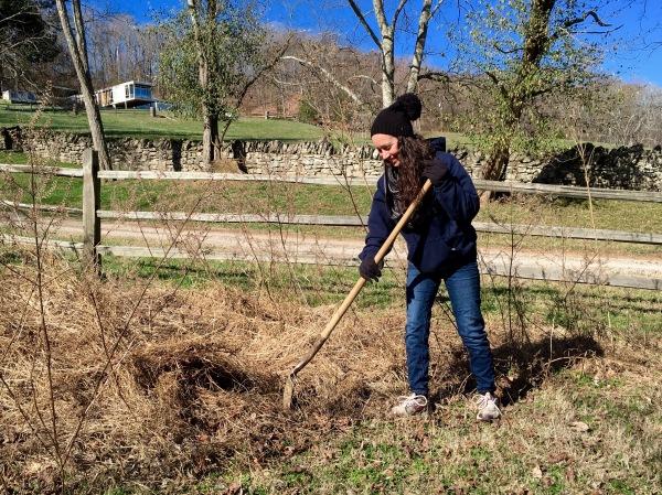 planting-a-tree